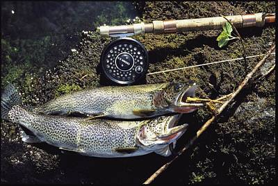 A Pair Of Cutthroat Trout, Salmo Print by Bill Curtsinger