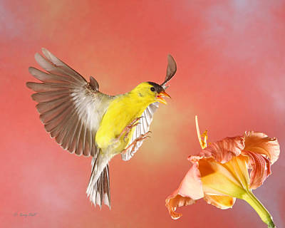 A Pair Of Nature's Beauties Print by Gerry Sibell
