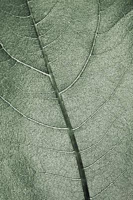 A Pale Green Leaf Print by Sindre Ellingsen