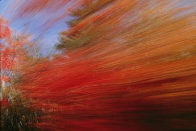 A Panned View Of A Deciduous Forests Print by Clarita Berger