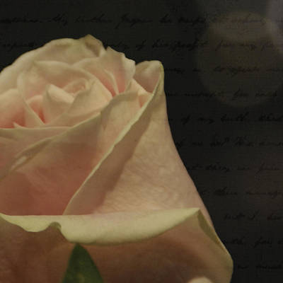 Pink Photograph - A Rose For Melody by Trish Tritz