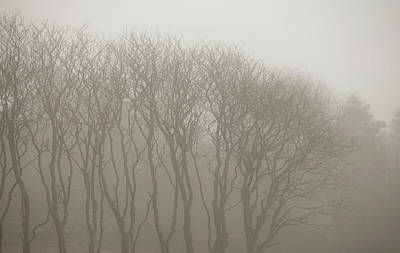 A Row Of Bare Trees In Fog Print by Sindre Ellingsen
