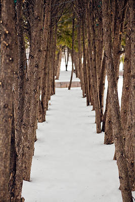 A Row Of Trees Outside In The Snow During Winter. Print by Adam Hester