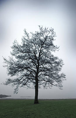 A Single Bare Tree By The Sea On A Misty Morning Print by Sindre Ellingsen