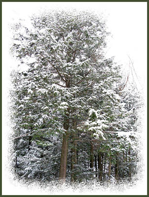 A Single Snow Covered Evergreen Pine Tree Framed In The Canadian Wilderness After A Snow Storm Print by Chantal PhotoPix
