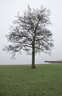 A Single Tree At The Sea Print by Sindre Ellingsen