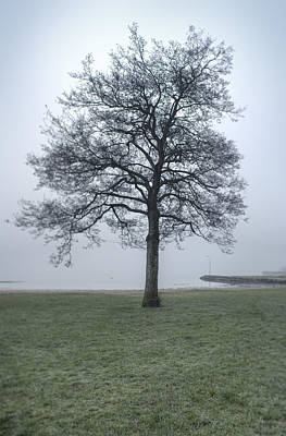 A Single Tree By The Sea On A Cold, Misty Morning Print by Sindre Ellingsen