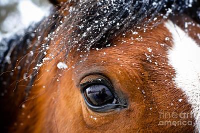 A Snowy Eye Print by Leaetta Mitchell