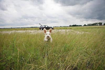 A Spanish Waterdog Running Through A Field Print by Julia Christe