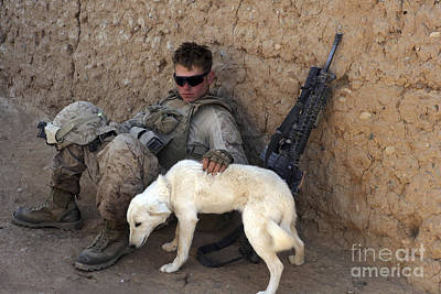 Pet Care Photograph - A U.s. Marine Pets A Dog While Taking by Stocktrek Images