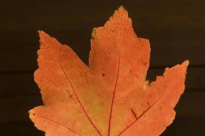 A Vibrant Colored Leaf Print by Joel Sartore