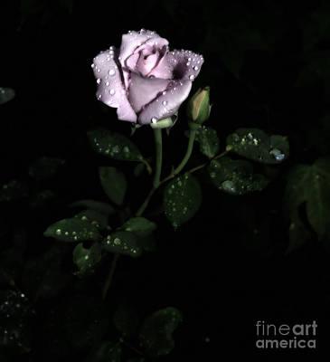 A Vintage Rose Print by Eva Thomas