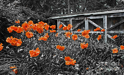 Flower Photograph - Abandoned Shed by Barbara McMahon