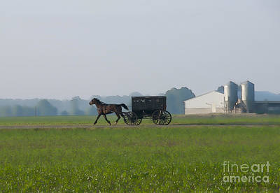 Amish Photograph - Across The Corn Field by David Arment