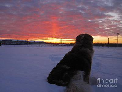 Dog In Landscape Photograph - Admiring The Sunset by Alanna DPhoto