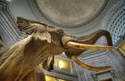 Smithsonian Museum Photograph - African Elephant by Jim Pearson