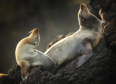 Sea Lion Photograph - Afternoon Stretch by Steve Munch
