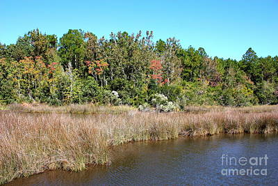 Landscape Photograph - Alabama Bayou In Autumn by Carol Groenen