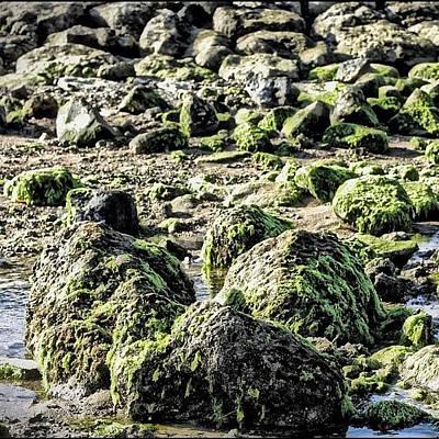 Algae Rocks Print by Arya Swadharma