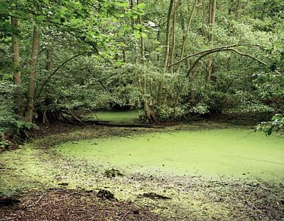 Algal Bloom In Pond Print by Michael Marten