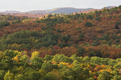 Algonquin In Autumn Print by Cale Best