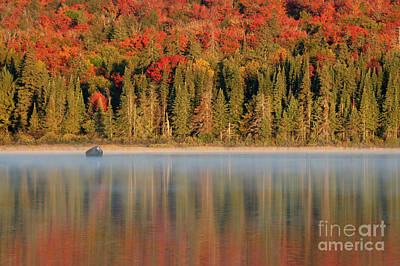 Algonquin Reflections Print by Chris Hill
