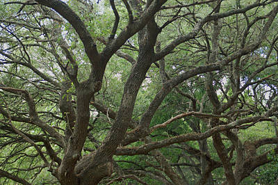 Green Photograph - Alive by Aimee L Maher Photography and Art Visit ALMGallerydotcom