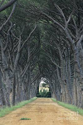 Plane Tree Photograph - Alley . Provence by Bernard Jaubert