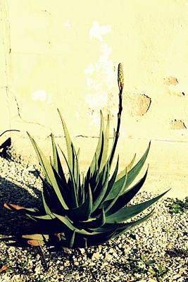 Aloe Print by Laurel Heritage