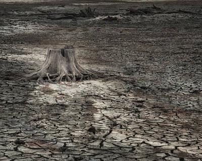 Photograph - Alone by Brenda Bryant