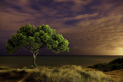 Alone Tree Print by Alex Stoen Photography