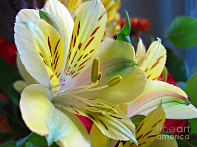 Lily Of The Incas Photograph - Alstroemeria by Addie Hocynec