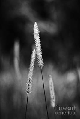 Wayside Photograph - Always by Hideaki Sakurai