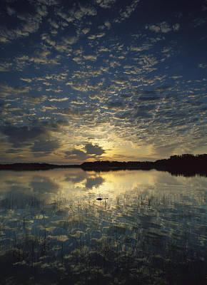 American Alligator In Nine Mile Pond Print by Tim Fitzharris