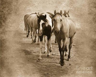 Quarter Horse Digital Art - American Quarter Horse Herd In Sepia by Betty LaRue