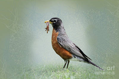 Robin Digital Art - American Robin With Worms by Betty LaRue