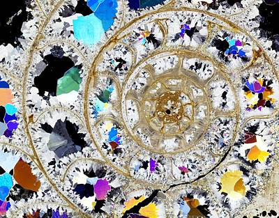 Ammonite Fossil, Thin Section Print by Dirk Wiersma