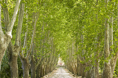 Europe Provence Aix-en-provence Photograph - An Alley Of Trees Leading Up To A House by Michael Melford