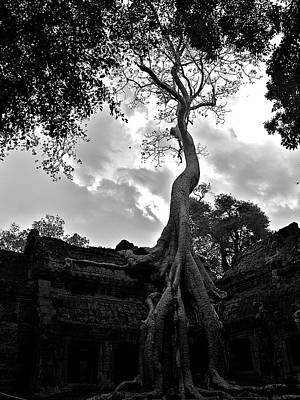 Ancient Tree Print by Arj Munoz