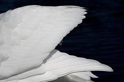 Angel Wings Print by Paulette Thomas