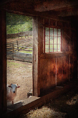 Barn Photograph - Animal - Lamb - Hello Anybody Home by Mike Savad