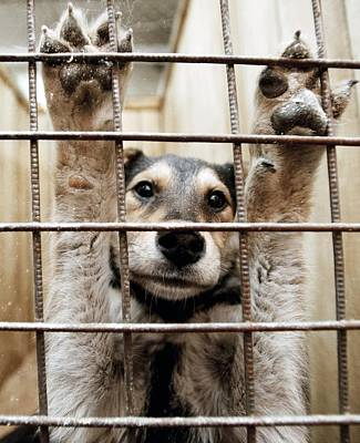 Animal Shelter, Russia Print by Ria Novosti