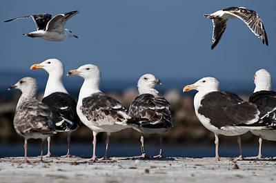 Annual Seagull Congress Print by Michael Mogensen