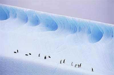 Antarctica, South Orkney Islands, Chinstrap Penguins On Iceberg Print by Kevin Schafer