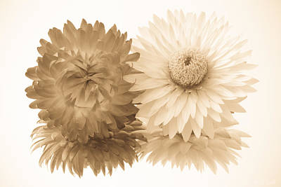 Antique Floral Duo Print by Heidi Smith