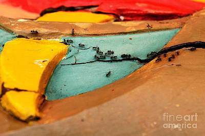 Animal Abstract Photograph - Antsy by Dean Harte