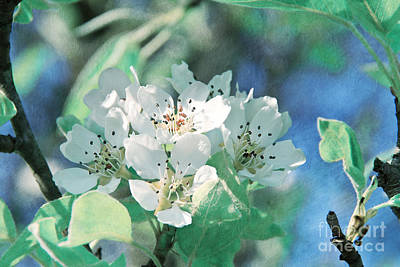 Apple Blossoms Print by VIAINA Visual Artist