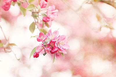 Apple Tree In Spring Print by Stephanie Frey