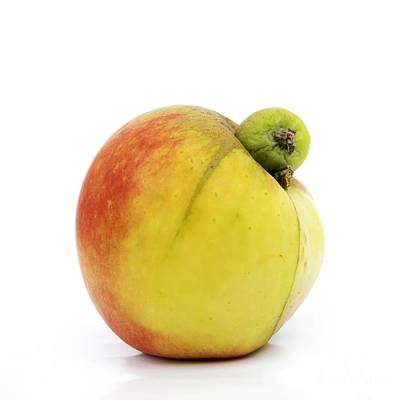 Nourishment Photograph - Apple With An Excrescence by Bernard Jaubert