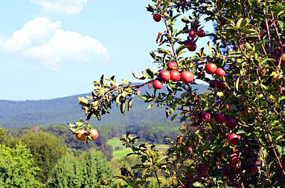 Apples On A Tree Print by Susan Leggett